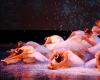 ecole de ballet -carpi- jewels- 1 parte (313)