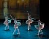Paquita – 2015 – ecole de ballet - carpi -spettacolo   (264)